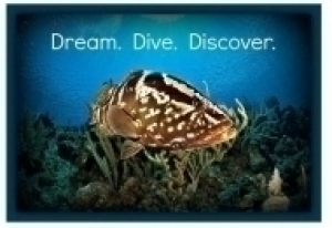 Dream.Dive.Discover.