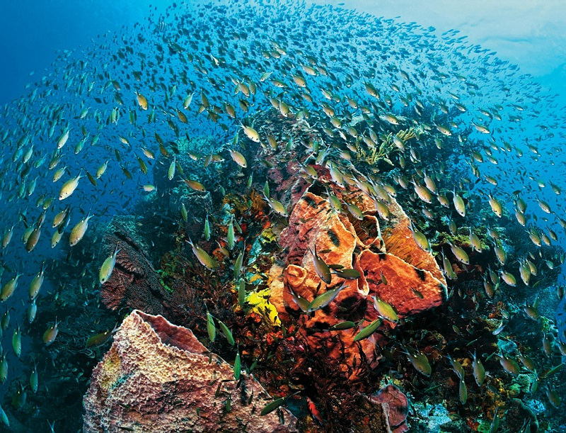 Anse-Chastanet-Fish-St Lucia
