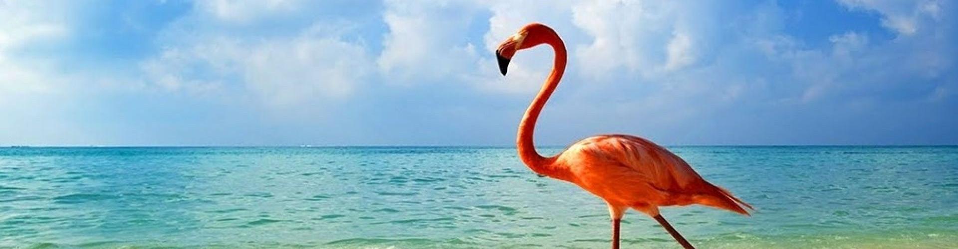 1 - Flamingo